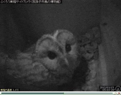 フクロウ巣箱側面カメラ